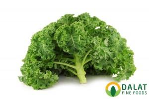 Cải xoăn Kale